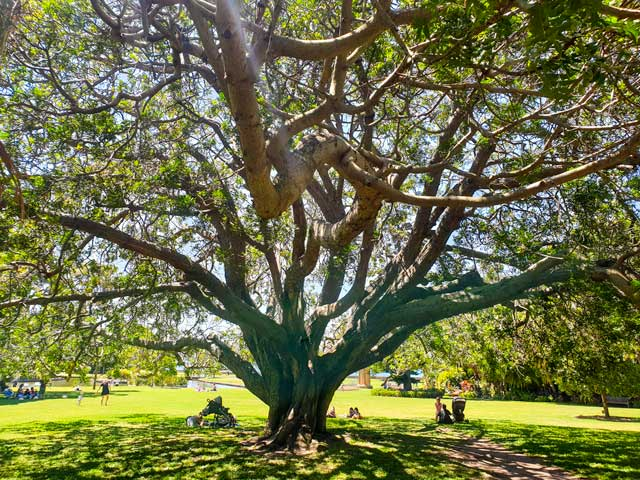 The beautiful Botanic Gardens are a favourite thing to do in Sydney